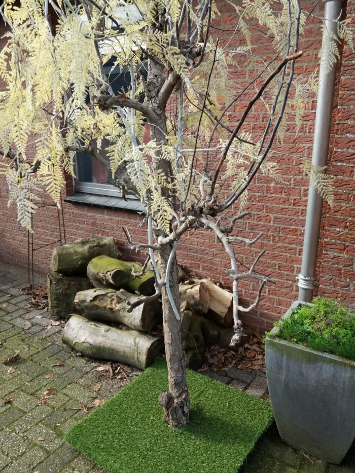 Trefpuntboom is verhuisd